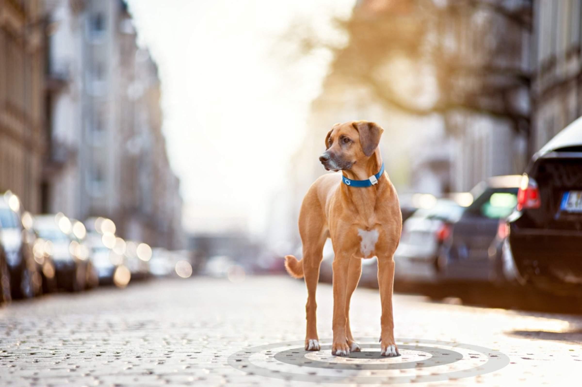 Haustiere dank IoT wieder finden